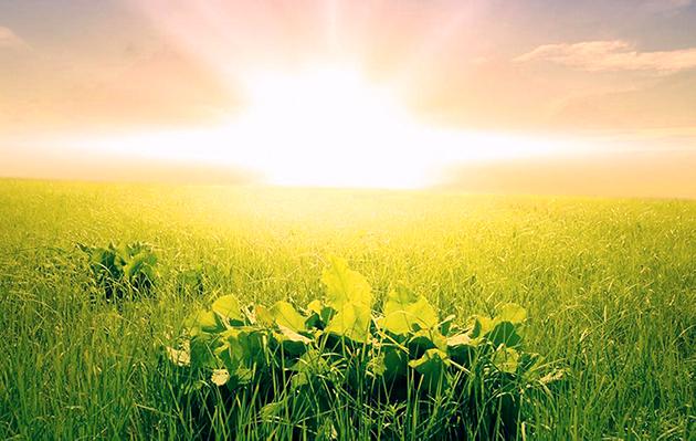 Llum solar, font d'energia vital.